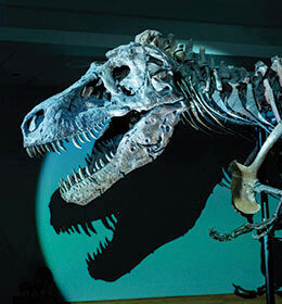 NEC Projectors Bring a Dinosaur's World to Life in Chicago Natural History Museum